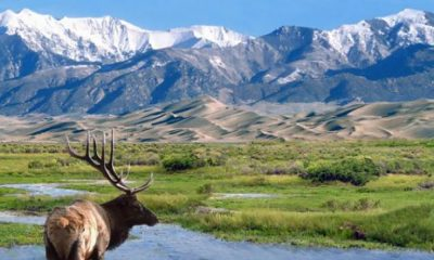 mountains with elk