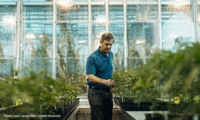 Hemp Horticulture