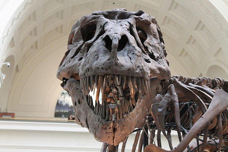 dinodaur head