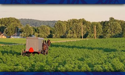 Amish hemp farm