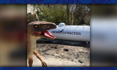 Hemp Extraction